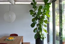 L i v i n g r o o m (dining part) / Dining table, sofa, orangery