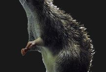 Rapid Rodent Removal, Dallas, TX 75238