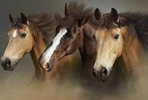 Happier Equines / Horses are such an amazing animals. These are some of the most amazing images we've found that showcase what a spectacular creation the horse is! / by Your Total Renovation