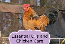 Eläinten hoito