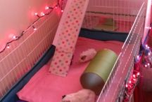 Guinea pig hutch indoor