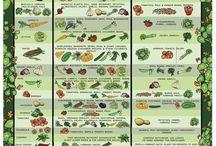Garden Tips / Tips and Tricks for your garden!