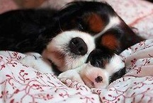 Adorable Animals / All things cute!
