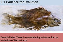 Evolution ib biology