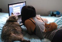 Gatos<3