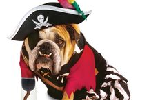 Pirate Pooches  / by Kennelwood Pet Resorts