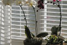 Addicted to Orchids