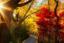 Trail in yard acres