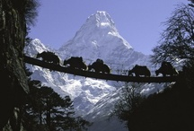 Nepal!!!!! Summer 2012!!! The places and things I hope to see!!! / by Naureen Dharani