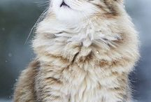 Gatti <3