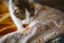 Rufus the cat quilt / Mike and John brought a gorgeous Harris Tweed and sunshine yellow velvet quilt from me a couple of weeks ago at the Manchester Interiors show and then promptly got Rufus the cat to do some modeling to show off the quilt. See; http://lisawatsonquilts.wordpress.com/2013/09/30/model-of-the-day-is-rufus-the-cat/ These are Mike's fab photos of Rufus.