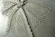 Fossils / by Kris Hawkins