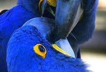 Blue... cobalt / A color designed to be dark and yet so luminous and flamboyant...