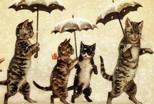 Crazy Cat Lady / by Kate C.
