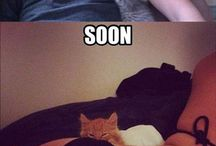 Random cat things