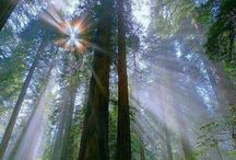 Parascheva's world **C i r c u l a r ** / A mystic forest, a centenarian witch, a lesson learned forever