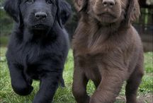 Cuteness.. dogs and puppy love