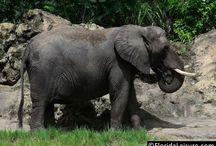 #AnimalKingdom / Animal Kingdom 2013 photos