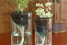 Self watering ideas for plants - clever!