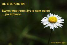 Wiesław Zięba - Fraszki / Są tu ilustrowane fraszki mojego autorstwa.