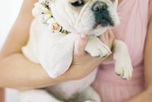 Wedding dogs!