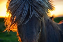 "Portraits of Horses / ""The essential joy of being with horses is that it brings us in contact with the rare elements of grace, beauty, spirit and freedom."" ~ Sharon Ralls Lemon."
