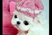 white puppy with pink knitted pom  pom