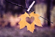 Fall In Love With Fall / by Ducky ♥