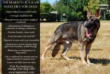 K9 Raw Diet=Healthy Dog / by Heather Marie