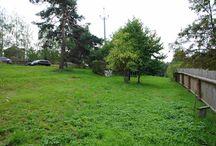 Stavební pozemek Kořenec / neobyčejný pozemek na výstavbu RD na okraji obce Kořenec