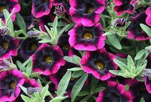 Gardening ideas I love... / by Melody Cusmano