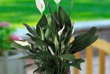 plantas p interiores