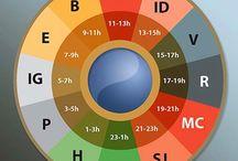 Reloj biologico segun MTCh