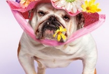 AYE CHIHUAHUA ❀⊱ღεεт ℳ¥ ℱяḯεᾔ∂ṧ⊰❀ / Pets too cute not to pin...
