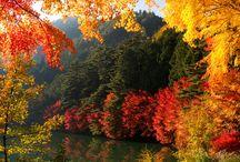 Côté automne / Les jolies couleurs de l'automne