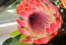 Proteas and pretty flowers