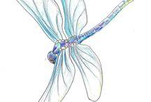 Ważki - dragonfly
