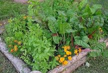 Garden Ideas / by Laurie Eckert