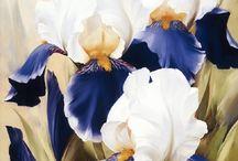 fehér-kék irisz