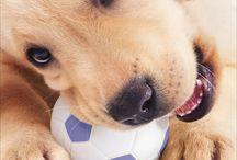 Puppy help
