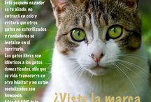 Gestión de colonias de gatos / Tips y consejos sobre el manejo ético de poblaciones de gatos libres.