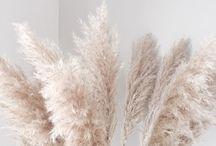 Pampa grass para decorar