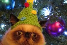 Cats  =^..^= Pugsley / Pugsly, The Kitten Who Regrets Everything / by Joan Halbig