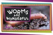 Co-op: worms class