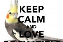 Eddie Bird / Catherine's board devoted to EDDIE BIRD!!!