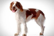All Dog Breeds / All Dog Breeds Information.Dog breeds with pictures Types of Dog Breeds.All facts related for Dog Breeds.List of Dog breeds etc.
