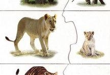 Przyroda_zwierzęta różne