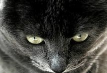 Because, cats :3 / by Sabrina Johnson