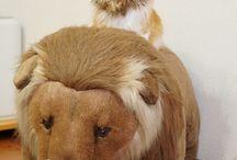고양이 삼월닮음