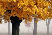 *season: Autumn / October fire*